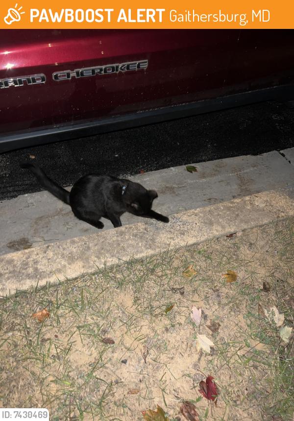 Found/Stray Unknown Cat last seen Back parking lot behind whetstone glen street , Gaithersburg, MD 20877