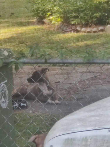 Found/Stray Female Dog last seen Fort Jackson/Percival Rd/Woodfield Park, Columbia, SC 29223
