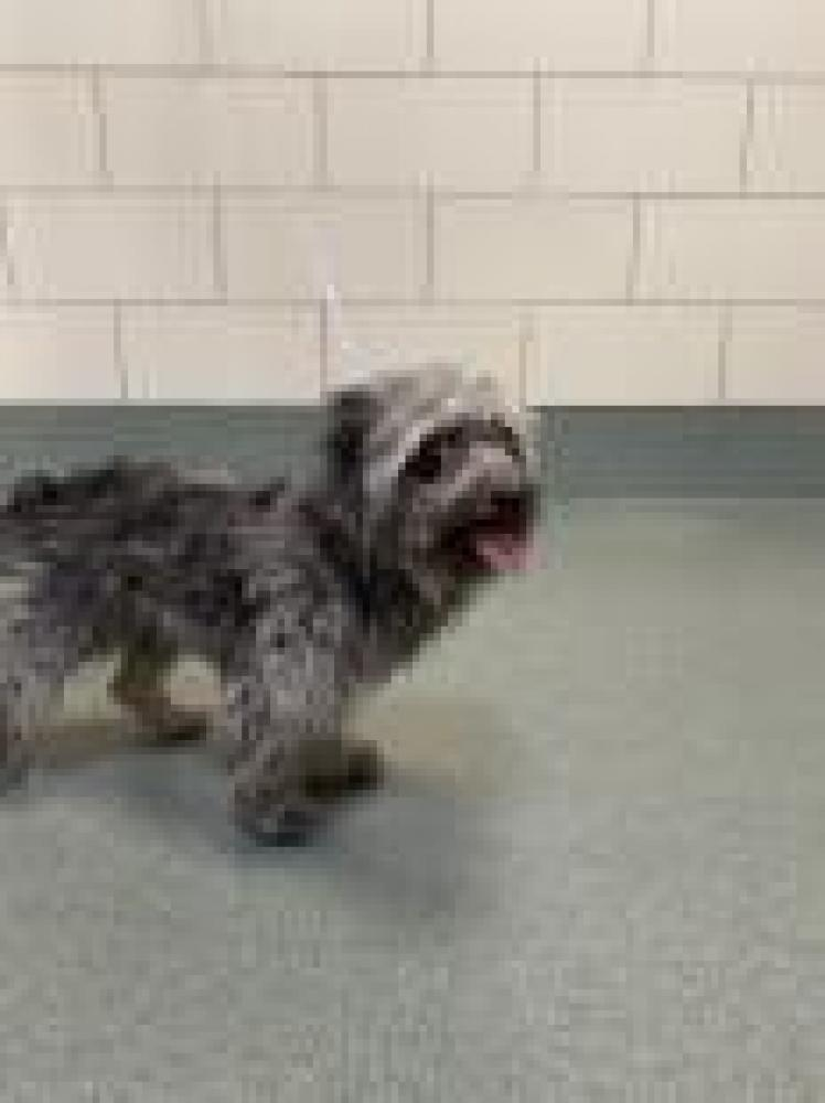 Shelter Stray Female Dog last seen Vienna, VA 22182, Fairfax, VA 22032