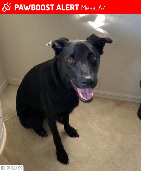 Lost Female Dog last seen Near E Manning St Mesa, AZ 85215, Mesa, AZ 85215