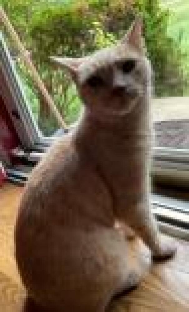 Shelter Stray Unknown Cat last seen Franconia, VA 22315, Fairfax, VA 22032