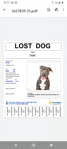 Lost Male Dog last seen Fore avenue or burmaster drive, Columbia, SC 29229