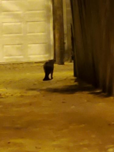 Found/Stray Unknown Cat last seen Swann St NW btwn 15th and 16th, Washington, DC 20009
