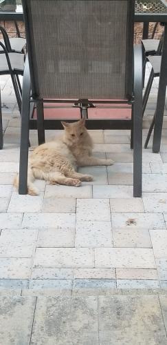 Found/Stray Female Cat last seen Saybrooke Gaithersburg, Gaithersburg, MD 20877