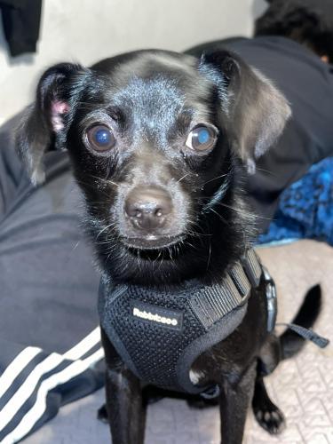 Lost Male Dog last seen Towne ave Carson California , Carson, CA 90746