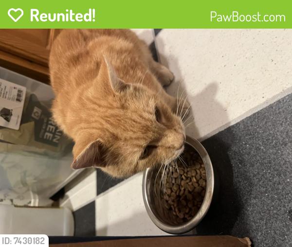 Reunited Male Cat last seen Howard Chapel Rd & Damascus Rd, Howard Chapel Rd, MD 20833