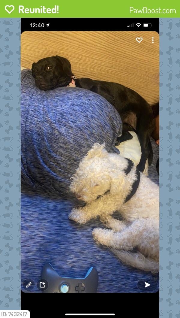 Reunited Male Dog last seen Horne and 8th avenue , Mesa, AZ 85204