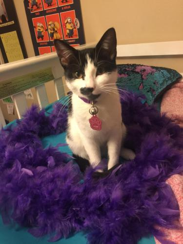 Lost Female Cat last seen Round Top Rd. & Jaster Rd, Round Top, TX 78954