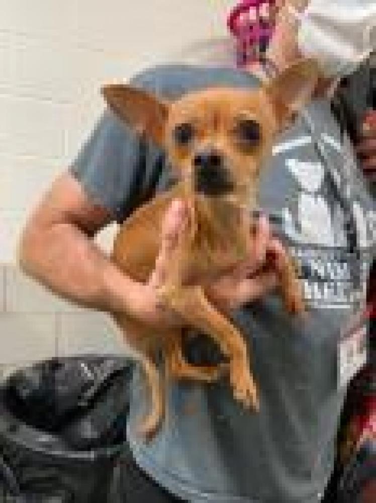 Shelter Stray Female Dog last seen Newington, VA 22079, Fairfax, VA 22032