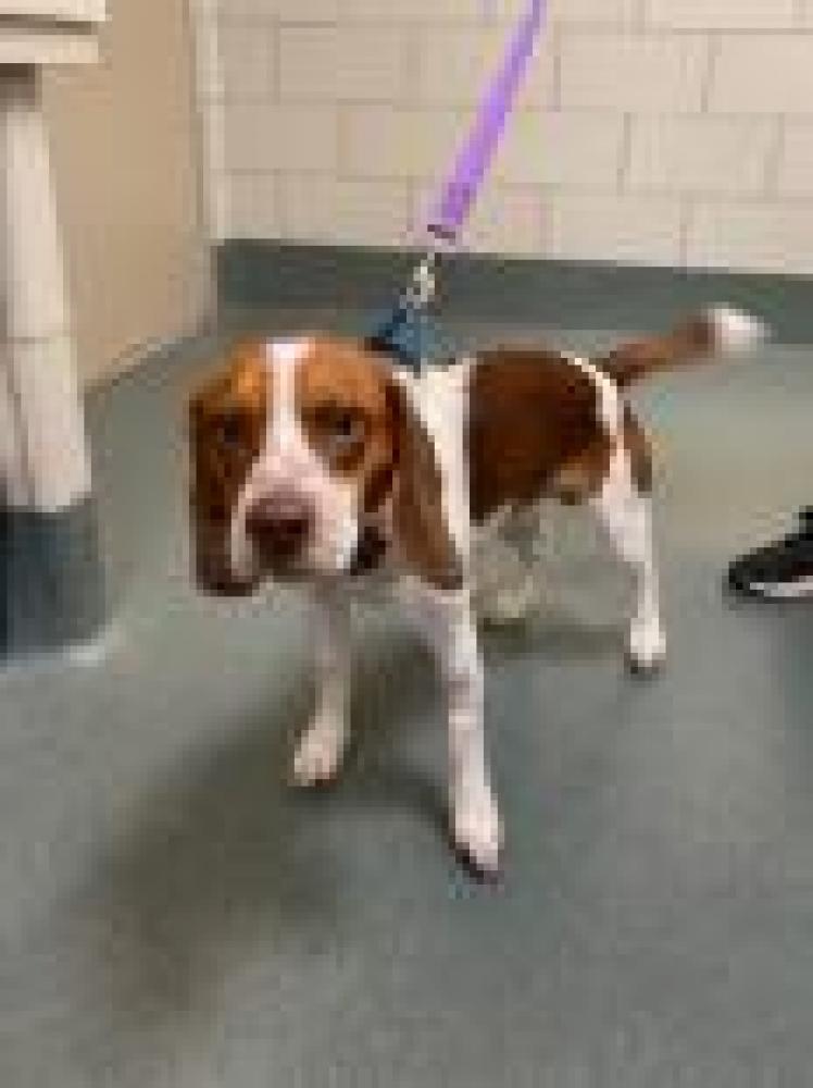 Shelter Stray Male Dog last seen Alexandria, VA 22306, Fairfax, VA 22032