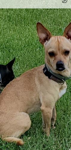 Lost Male Dog last seen Clinton rd va, Clifton, VA 20124