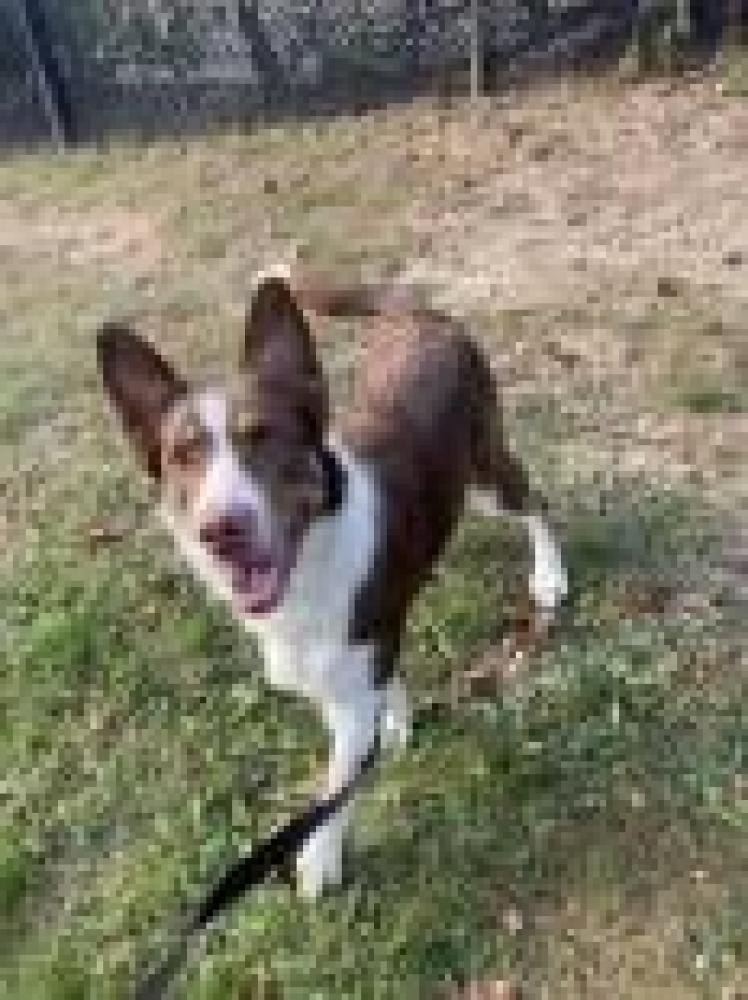 Shelter Stray Female Dog last seen Centreville, VA 20121, Fairfax, VA 22032