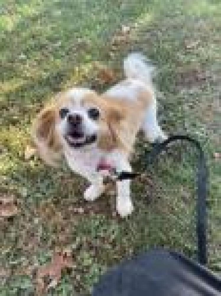 Shelter Stray Male Dog last seen McLean, VA 22101, Fairfax, VA 22032