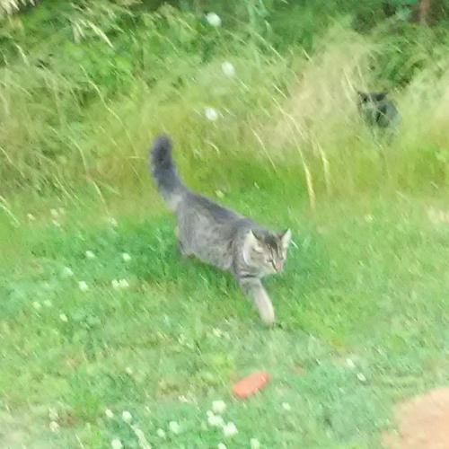 Lost Female Cat last seen 7th Ave N. & Flagg St, Myrtle Beach, SC 29577