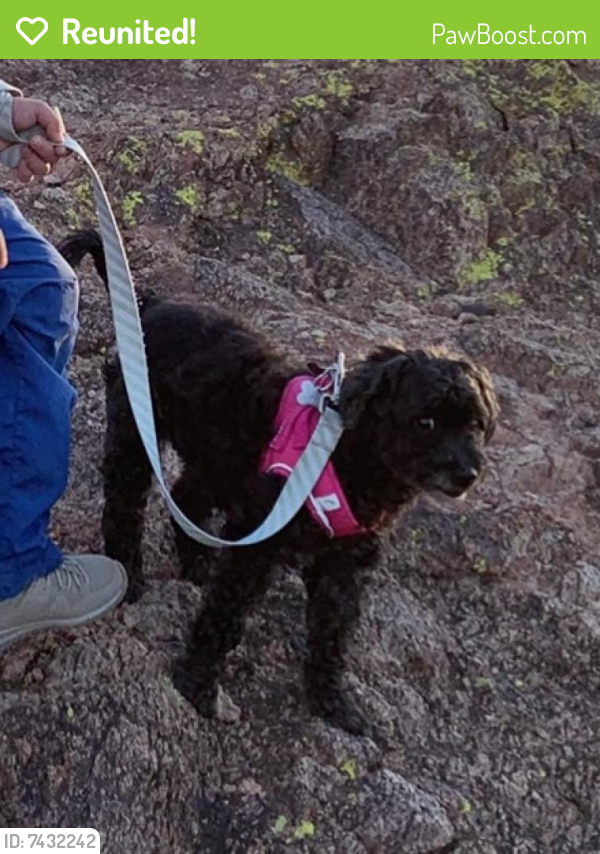 Reunited Female Dog last seen Recker and Brown Mesa, AZ , Mesa, AZ 85205