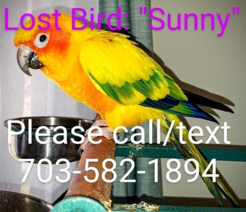 Lost Unknown Bird last seen Hibbling Ave and Dinwiddie St, Springfield, VA 22150