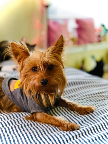 Lost Male Dog last seen Oak st  & 15 st , Grand Prairie, TX 75050