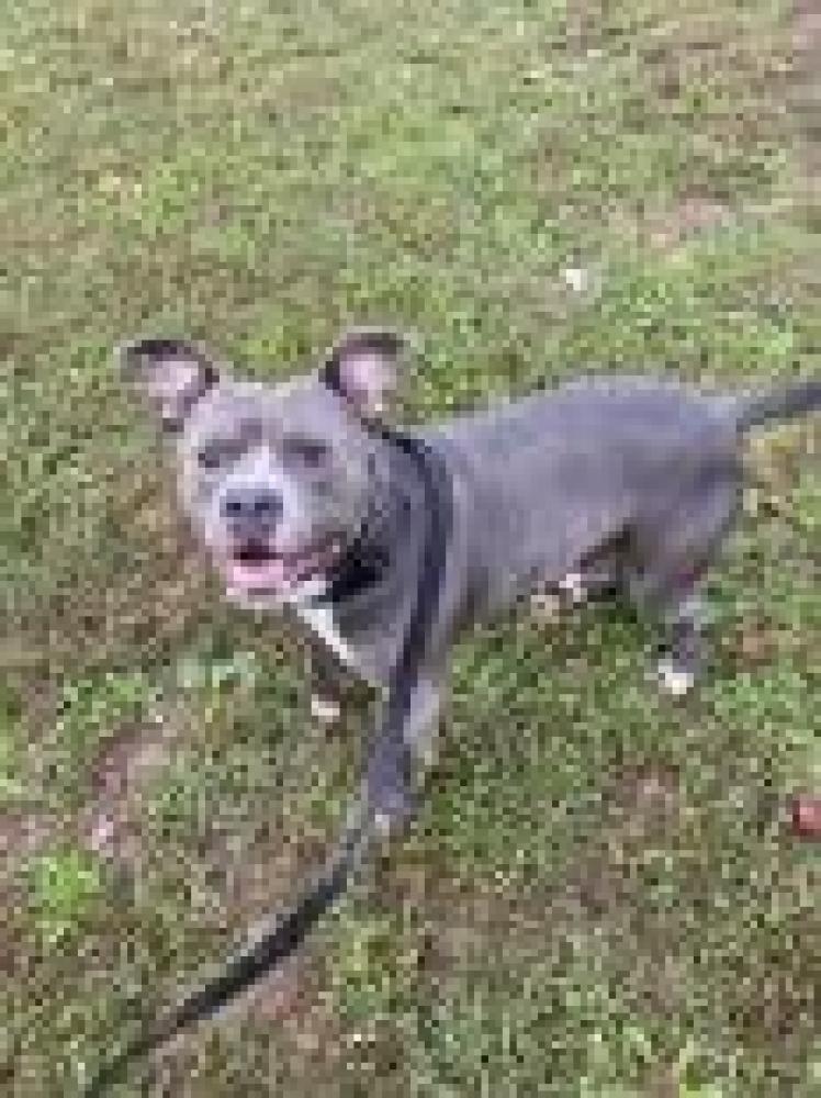 Shelter Stray Male Dog last seen Groveton, VA 22307, Fairfax, VA 22032