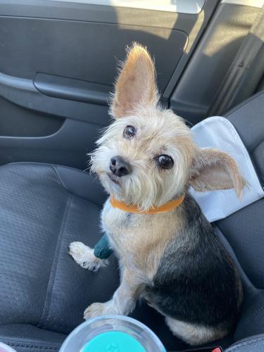 Lost Female Dog last seen Deeds rd… back of Barkers Ridge neighborhood, Houston, TX 77084