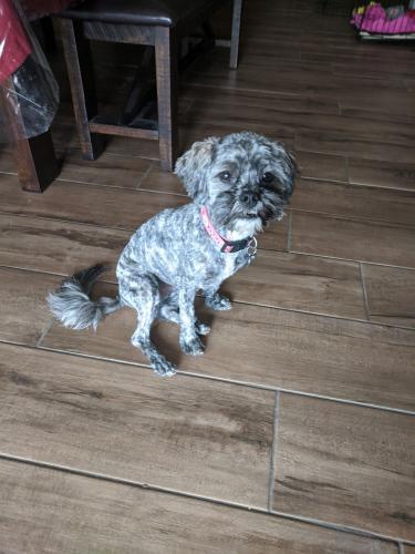 Lost Female Dog last seen 7th Ave and Camelback, Phoenix, AZ 85013