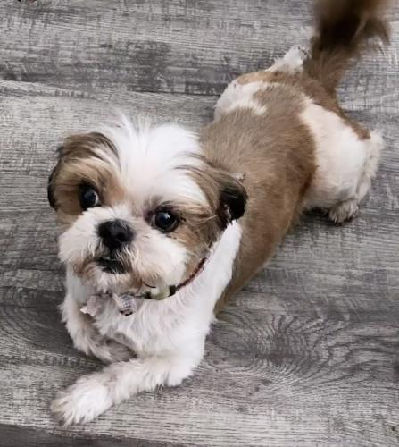 Lost Male Dog last seen King Ave , Los Angeles, CA 90744