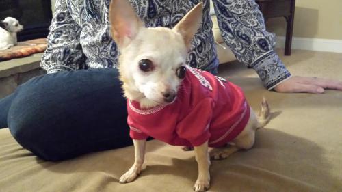 Lost Female Dog last seen 33rd Avenue North @ Hwy 17, Myrtle Beach, SC 29577