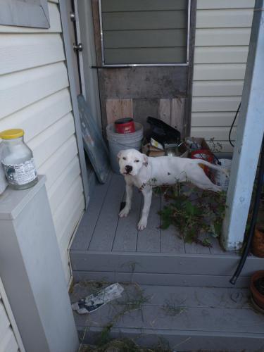 Found/Stray Male Dog last seen Jackson St, beltline Rd , Irving, TX 75061