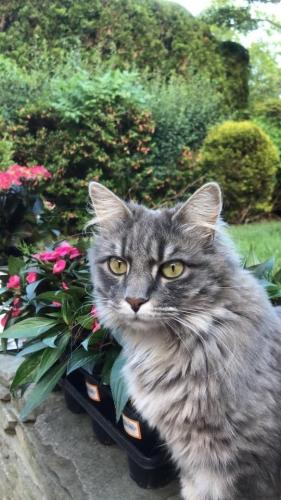 Lost Female Cat last seen New Hyde Park, New Hyde Park, NY 11040