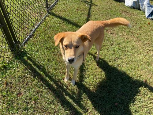 Found/Stray Unknown Dog last seen Lake Murray elementary , Chapin, SC 29036