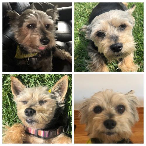 Lost Female Dog last seen s curson ave and washington blvd , Los Angeles, CA 90016