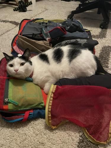 Lost Male Cat last seen Near Donna rd Raleigh nc , Raleigh, NC 27604