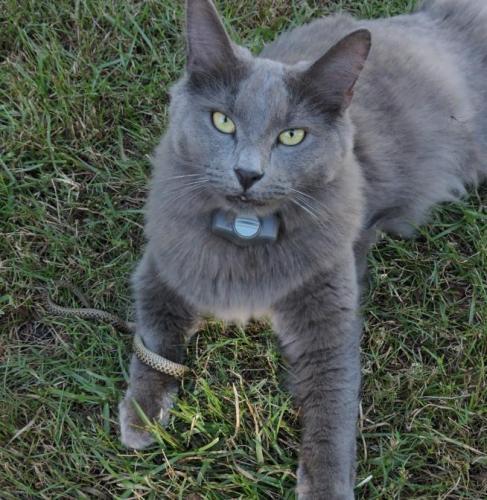 Lost Female Cat last seen Partridge Lane and Waverly, Pawleys Island, SC 29585