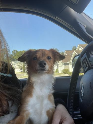 Found/Stray Unknown Dog last seen Campbell thickett/ s. Railroad Ave, Ridgeville, SC 29472