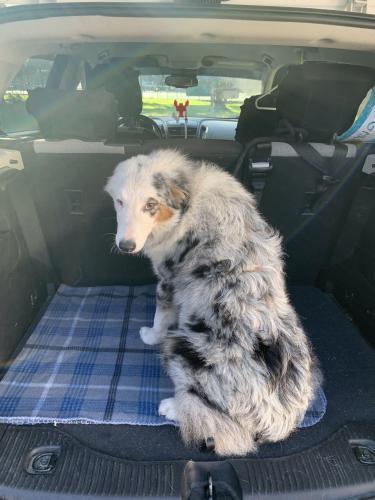 Found/Stray Female Dog last seen City Park, New Iberia, LA 70563