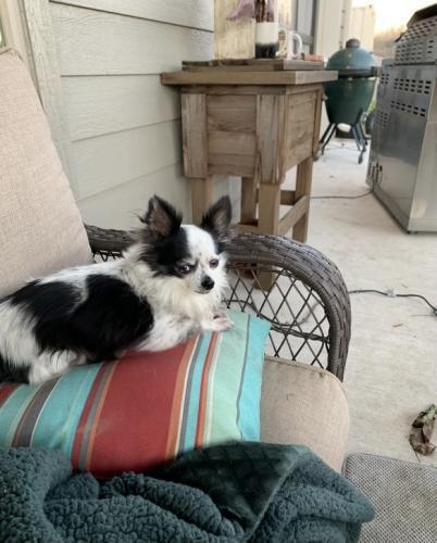 Lost Female Dog last seen Highway 159 e , Hempstead, TX 77445