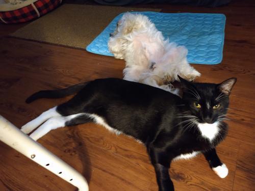 Lost Male Cat last seen Normandy Blvd/Firwood Dr., Deltona, FL 32725