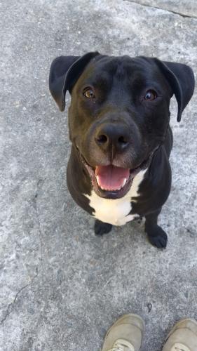 Found/Stray Unknown Dog last seen Oak St & Stark St, Columbia, SC 29205