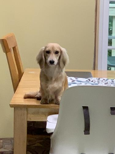 Lost Female Dog last seen Trail head at Hemlock Overlook Regional Park , Clifton, VA 20124