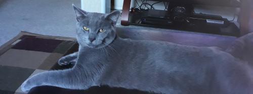 Lost Male Cat last seen Marquette Ct, Deltona, FL, Deltona, FL 32725