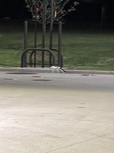 Found/Stray Unknown Cat last seen Sheetz, Sterling, VA 20166