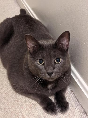 Lost Male Cat last seen Elkin Street, Alexandria, VA 22308
