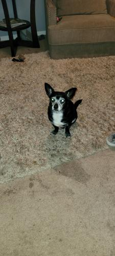 Found/Stray Male Dog last seen D'Arcy rd, District Heights, MD 20747