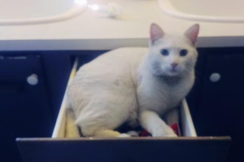 Lost Male Cat last seen Hickory Hill Dr & Gross, Moncks Corner, SC 29461