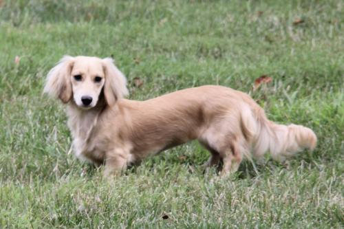 Lost Female Dog last seen Henderson Rd. and Valley Run Drive, Clifton, VA 20124