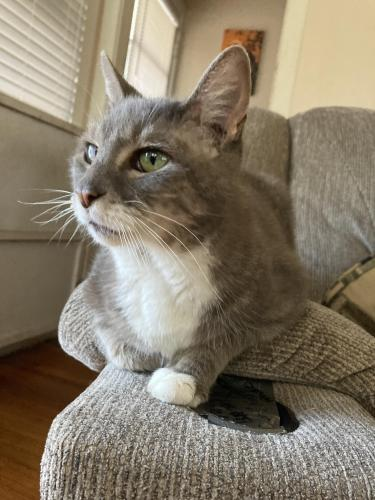 Found/Stray Unknown Cat last seen Sunrise park, Holly Hill, FL 32117