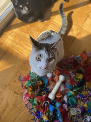Lost Female Cat last seen Capital Park Plaza & Twins, Washington, DC 20024
