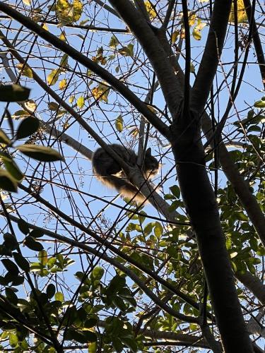 Found/Stray Unknown Cat last seen Gerard st, Rockville, MD 20850