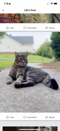 Lost Male Cat last seen Waterfall Subdivision, Irmo, SC 29063