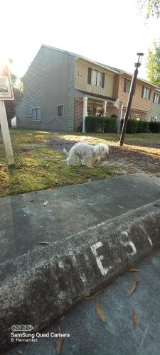 Found/Stray Male Dog last seen Kings River Rd and Beaver Pond Loop, Georgetown County, SC 29585
