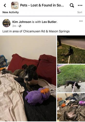 Lost Female Dog last seen Chicamuxen & Mason Springs, Indian Head, MD 20640